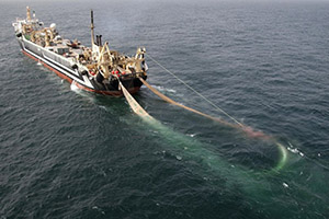 A fishing trawler dragging a net